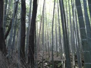嵯峨野竹林