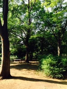 早朝の萩中公園