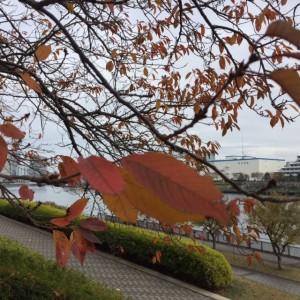 秋の隅田川