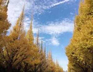 神宮外苑・銀杏並木